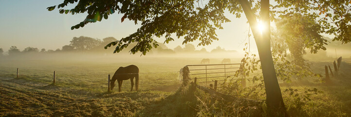 Lonely horse on an autumnal pasture