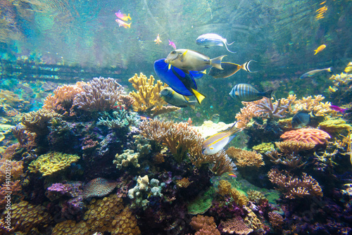 Staande foto Koraalriffen Wonderful and beautiful underwater world with corals and tropical fish.