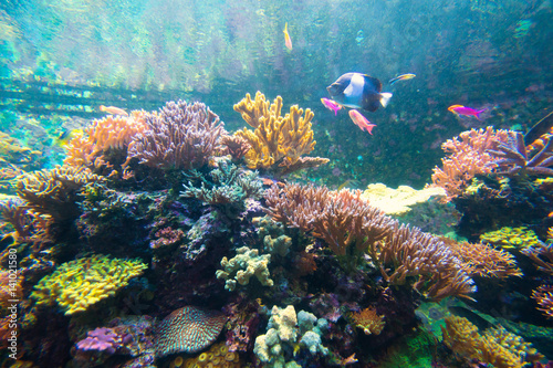 Photo sur Aluminium Sous-marin Wonderful and beautiful underwater world with corals and tropical fish.