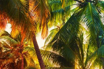 Fototapeta Las Coconut palm tree leaves background