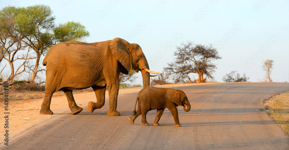 Mother and baby elephant walking across a road