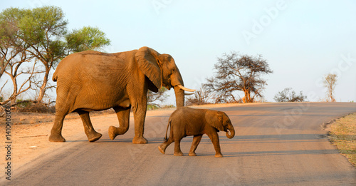 Foto op Aluminium Olifant Mother and baby elephant walking across a road