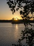 Fototapeta Krajobraz - Sunset through the trees