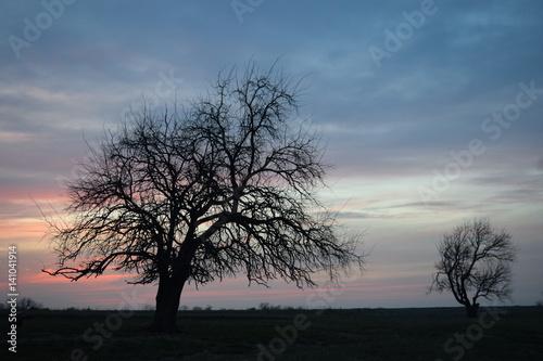 Staande foto Afrika Lone Tree