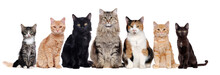 A Group Of Cats Of Different B...