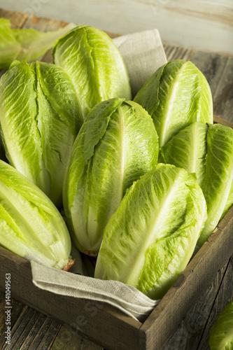 Fotografie, Obraz  Raw Green Organic Romaine Lettuce