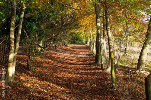 Path through Autumn Woodland in Surrey, England