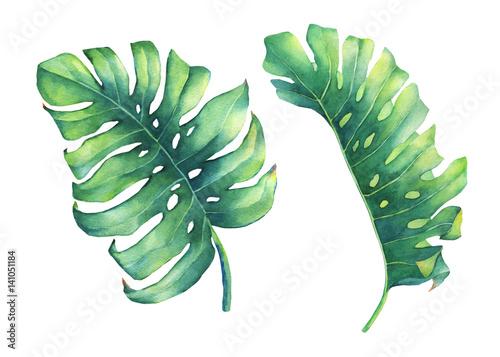 Fotografie, Obraz  Set of big tropical green leaf of Monstera plant
