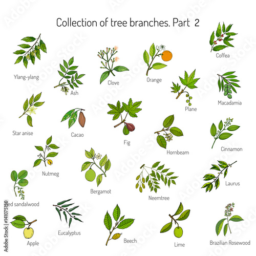 Set of different tree branches Fototapet