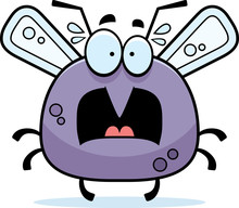 Scared Little Mosquito