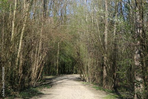 Foto op Canvas Weg in bos Parc de l'île d'amour