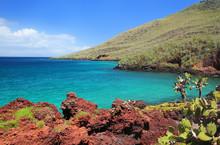 Shoreline Of Rabida Island, Ga...