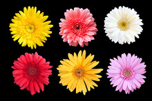 Set Of Colorful Seasonal Blooms On Black Background