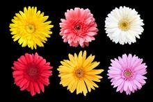 Set Of Colorful Seasonal Bloom...