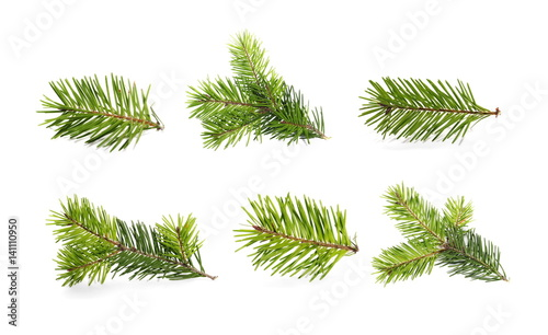 set fir tree branch isolated on white