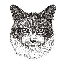 Drawn Portrait Of Cute Cat. Animal, Kitty, Pet Sketch. Vintage Vector Illustration