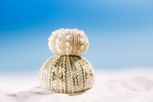 Urchin Shell Starfish With Oce...