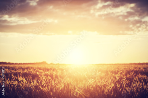Garden Poster Brown Field, countryside at sunset. Harvest time. Vintage