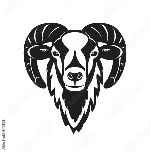 Fotografie, Obraz  Mouflon sheep  head vector illustration
