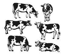 Holstein Cattle Silhouette Set. Cows Front, Side View, Walking, Lying, Gazing, Eating, Standing