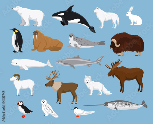 Arctic animals collection with reindeer, orca, narwhal, shark, musk ox, fox, wol Poster Mural XXL