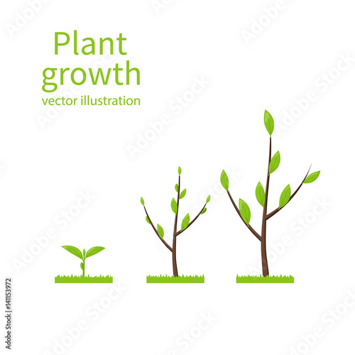 Steps Growth Tree Template Infographic Process Of Growth Of Tree