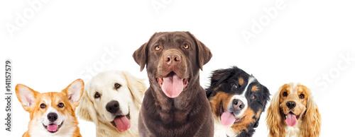 Fotografía  Portrait dog looking
