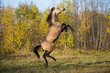 Horse in autumn