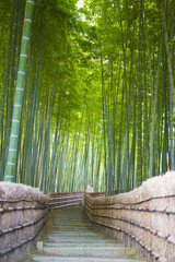 Obraz Bamboo Groves, bamboo forest in Arashiyama, Kyoto Japan.