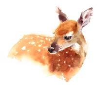 Watercolor Baby Deer Hand Pain...