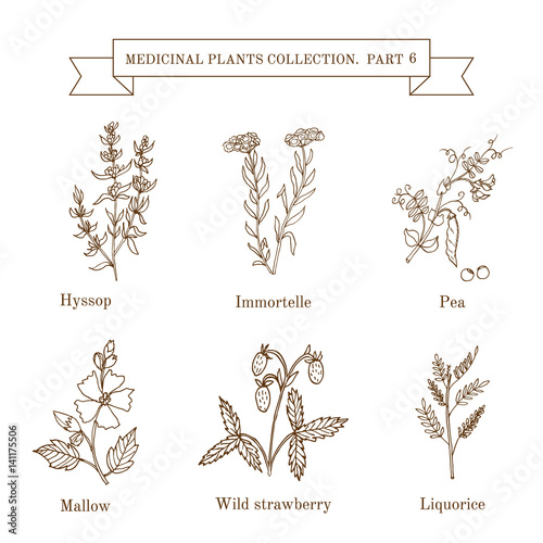 Vintage collection of hand drawn medical herbs and plants Canvas Print
