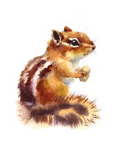 Watercolor Chipmunk Eating Nut...