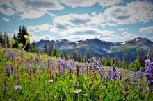 Cathedral Provincial Park BC C...