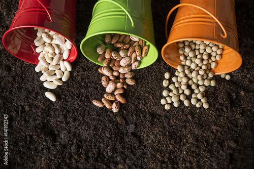 Fotografie, Obraz  Spring planting plants