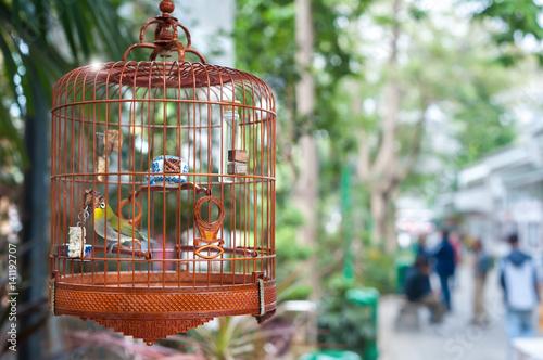 Obraz na plátně Small bird in a cage at Yuen Po Bird Market, Hong Kong
