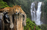 Fototapeta Sypialnia - Leopard on waterfall background