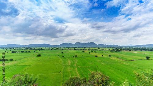 Fotobehang Rijstvelden Paddy fields in countryside , Thailand