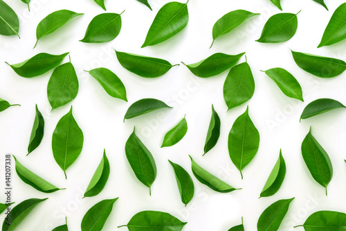 Top view shot of green leaves flat lay on white background - 141207338