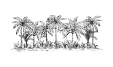 Panoramic View Of The Forest From Palm Trees Hand Drawn Vector Illustration Sketch Design.