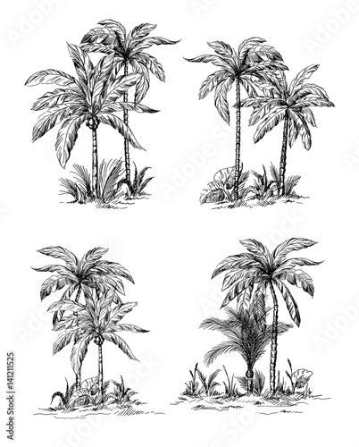 Set tropical palm trees with leaves, mature and young plants, black silhouettes isolated on white background. Sketch design. Wall mural