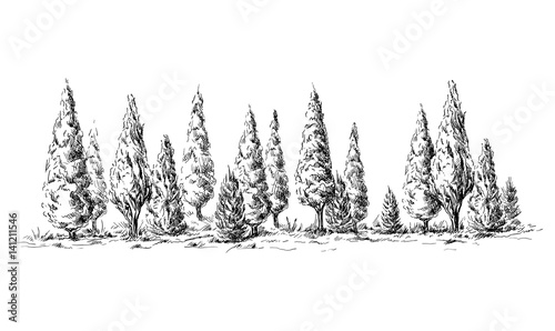 Fotografiet  panoramic view of the forest from cypress trees hand drawn vector illustration Sketch design