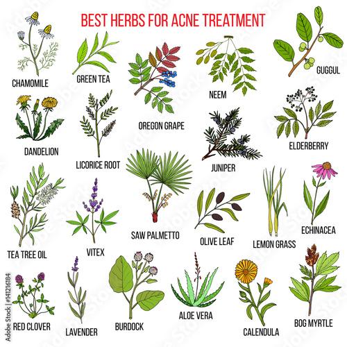 Fototapeta Collection of herbs for acne treatment obraz na płótnie