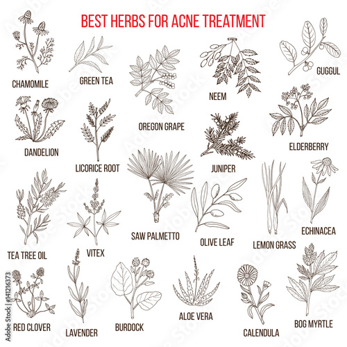Fototapeta Collection of herbs for acne treatment obraz