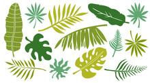 Leaves Set. Tropical Plants