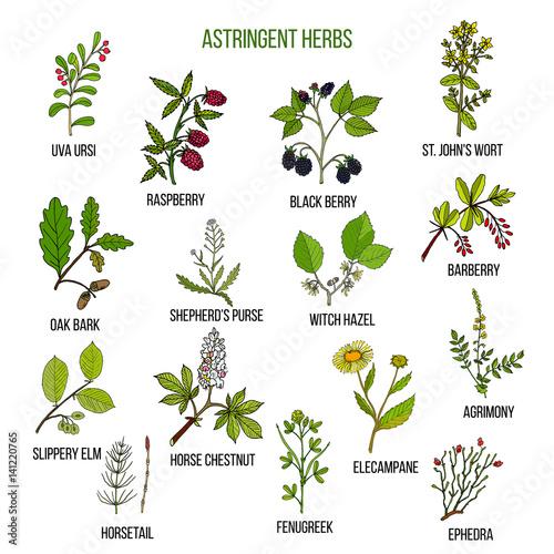 Photo Astringent herbs. Hand drawn set of medicinal plants