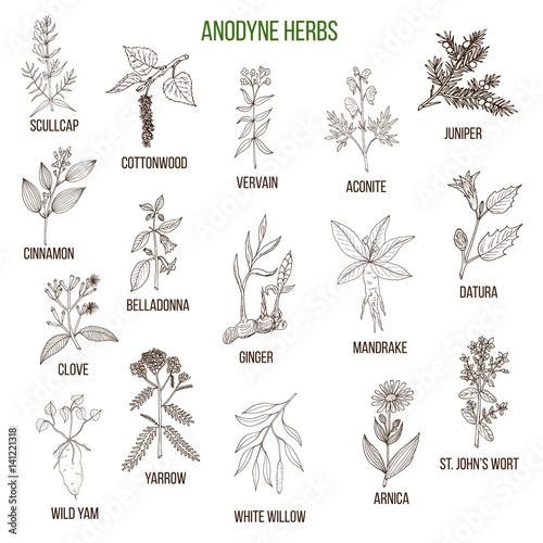 Photo Anodyne herbs. Hand drawn set of medicinal plants