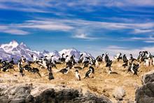 Cormorants On Island On Beagle Channel