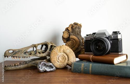 Fotografia  Collezione di antichità