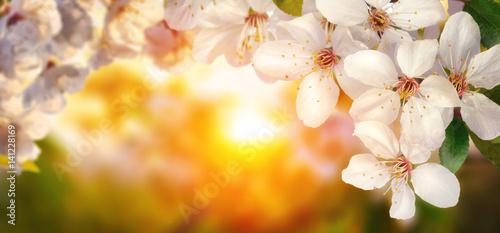 Foto-Schiebegardine ohne Schienensystem - Kirschblüten umrahmen die warme untergehende Sonne