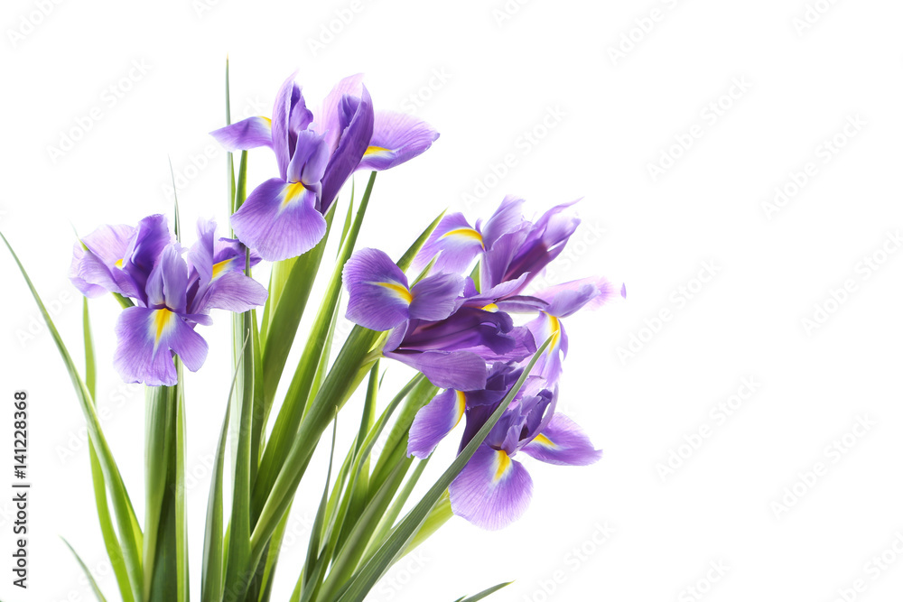 Fototapeta Bouquet of iris flowers isolated on a white